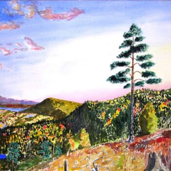Pine Tree, Østerdal, Norway, Bernt Balchen - Fine Arts