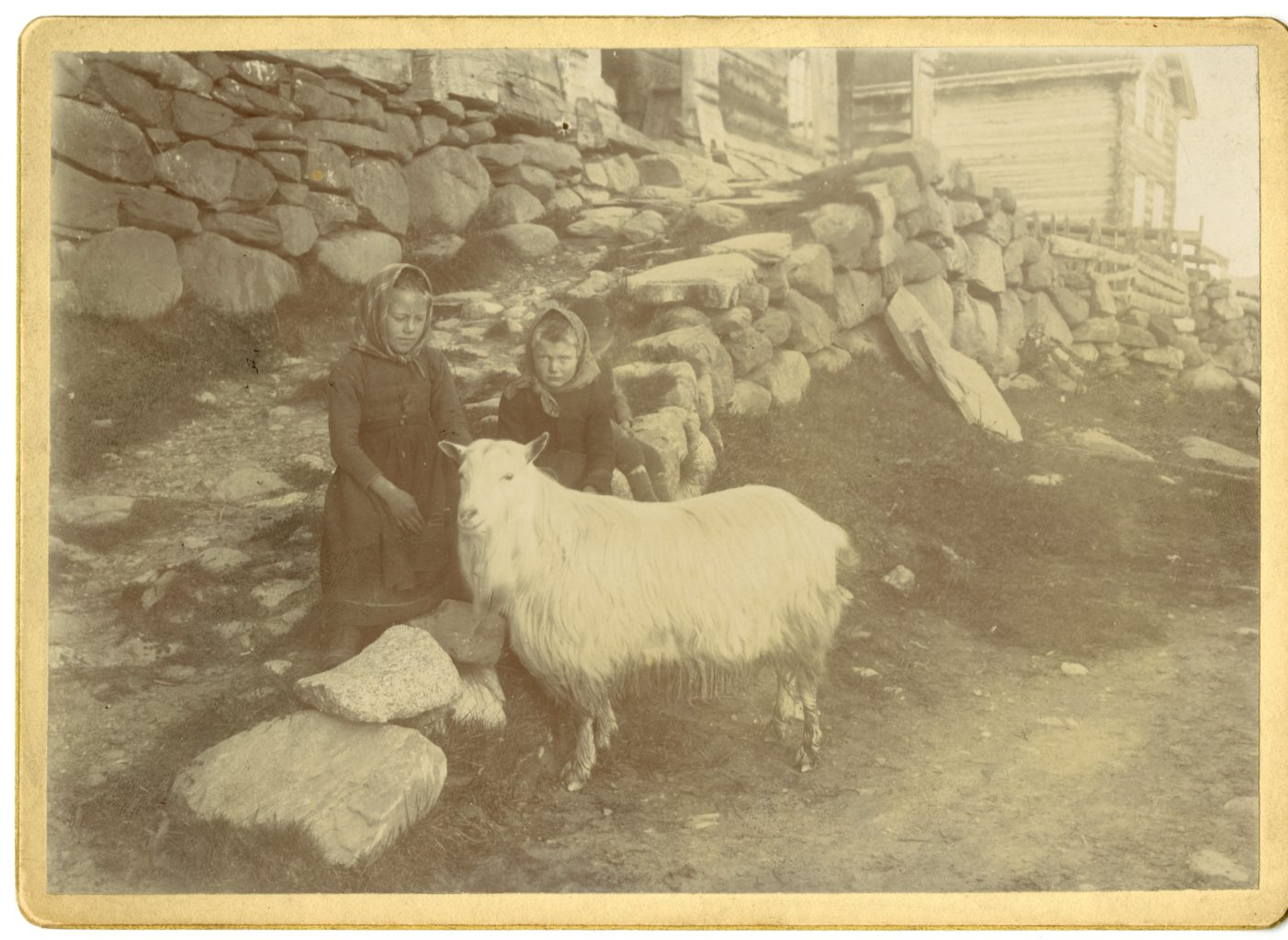 Two young girls sit on rock wall with goat, Midtgarden.