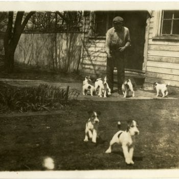A man and eight terriers.